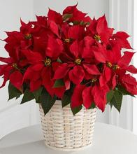 Red Poinsettia Basket-Large